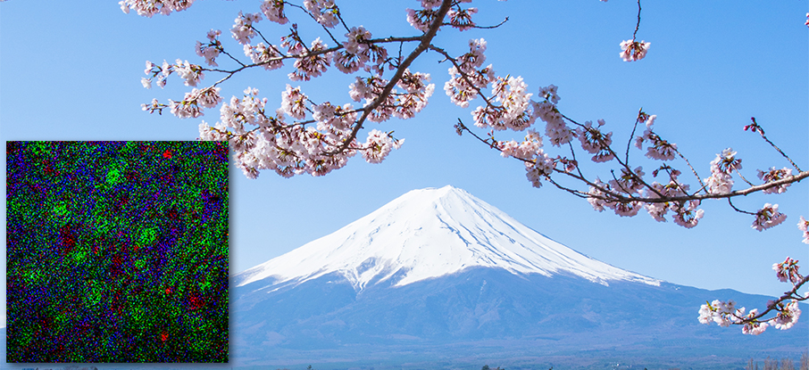 Cherry blossoms mount fuji